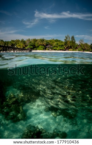 A school of grunts swim off the beaches of Lankayan Island, Malaysia - stock photo