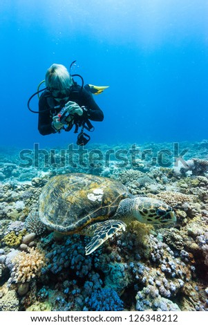 A SCUBA diver photographs a Hawksbill turtle on a coral reef - stock photo