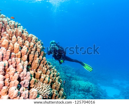 A SCUBA diver photographs a large porite coral on a tropical reef - stock photo