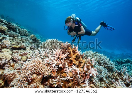 A SCUBA diver swims next to hard corals on a tropical reef