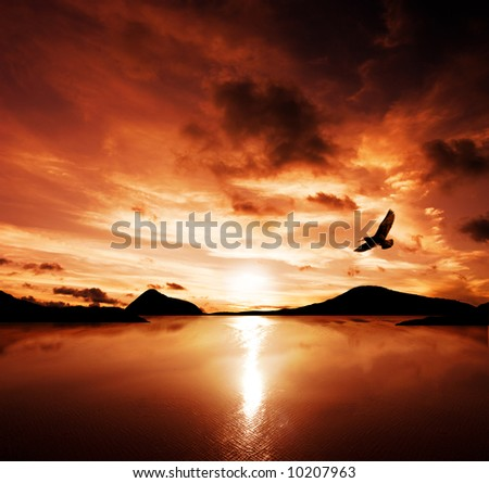 A sea bird flies off into the amazing sunset - stock photo