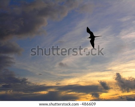 A sea gull in the sunset sky