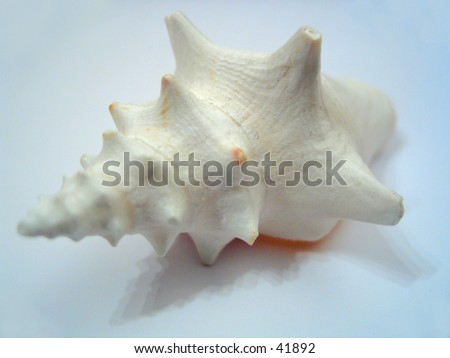 a sea shell on an isolated background