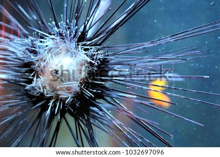 A sea urchin on a aquariumglass