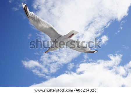 A seagull bird flying in the sky