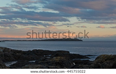 A seagull flies over the Pacific Ocean at dusk. / Seagull Flying Over Sea - stock photo