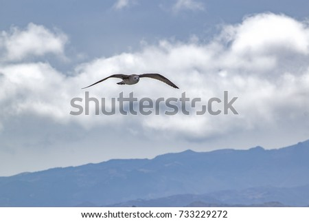 a seagull flying on sea in gran canaria island, with clouds and mountains on background