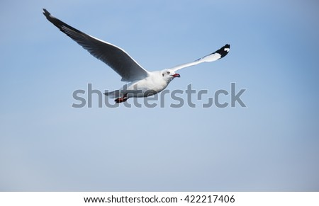 A Seagull in The Blue Sky with Clouds with wide spreading wings flying from left to right for nature background. - stock photo