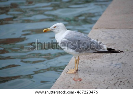 A seagull in Venice, Italy
