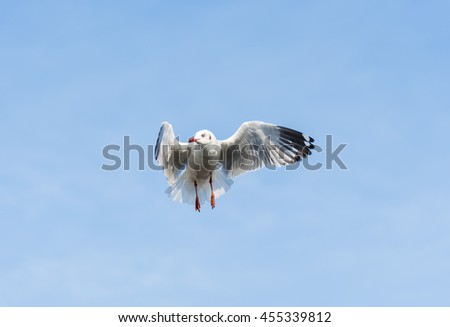 A Seagull is stunningly waiting for Food in the Air with Blue Sky and Clouds for Nature Backgrounds. - stock photo