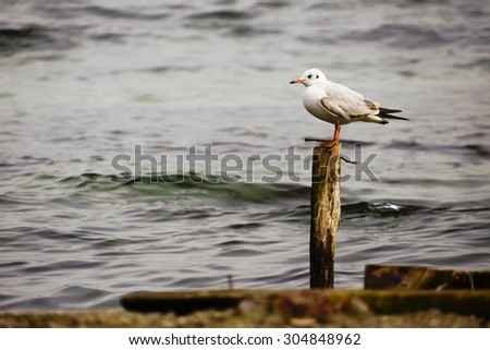 A seagull on the bank of Bosphorus, Istanbul. - stock photo