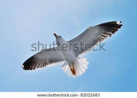 A seagull soaring in a blue sky