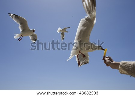 a seagull taking food out of a persons hand.