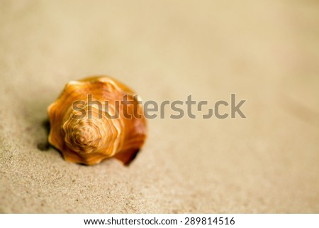 A seashell on the sand - stock photo