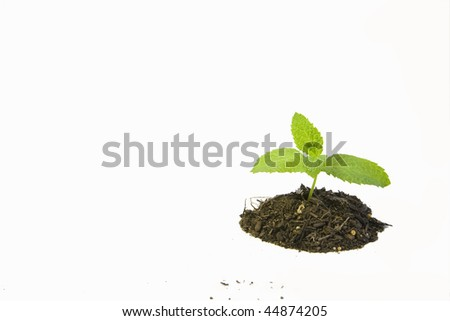 A seedling by itself - stock photo