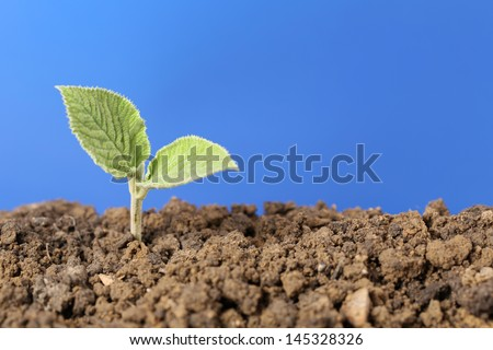 A seedling is growing in the dirt in a garden - stock photo