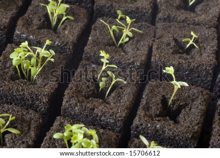 A  seedlings of greenhouse. - stock photo
