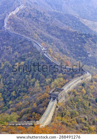 A segment of tHe Great Wall of China near Munianyu mountains atop range surrounded by bright yellow autumn leaf trees in vertical panorama without sky - stock photo