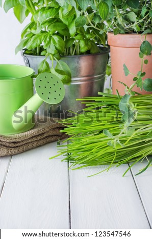 A selection of potted home grown culinary herbs on an old white painted wood kitchen table with watering can and hessian sack. - stock photo