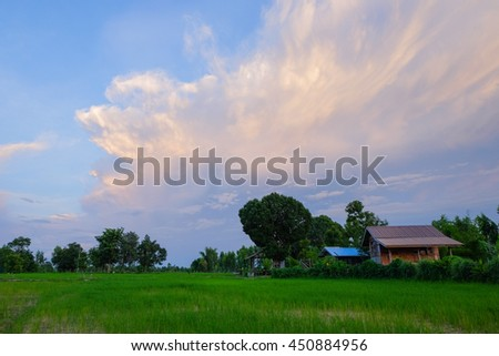 a selective focus picture of rice sprout at rice field with white clouds blue sky