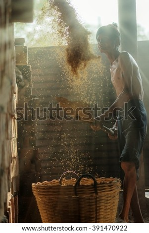 A senior / Asian man working in farm