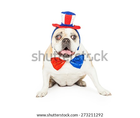 A senior Bulldog celebrating the Fourth Of July wearing a red, white and blue hat and bow tie.