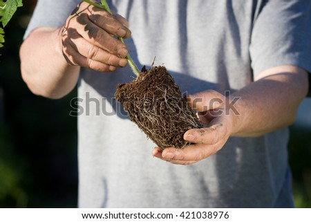 A senior man transplanting flower to another flowerpot; hard work - stock photo