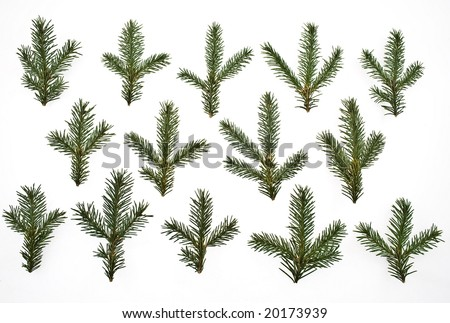 a set fir tree branches isolated on white - stock photo
