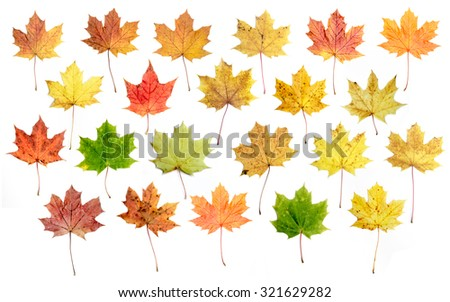 A set of autumn leaves for designers