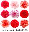 A set of 9 carnation flowers - stock photo