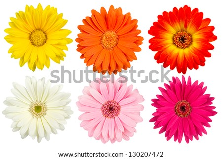a set of colorful gerbera blossoms