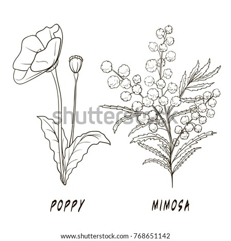 Hand Drawn Lavender Branch Leaves Isolated 330876182