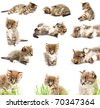 A set of funny cats. - stock photo