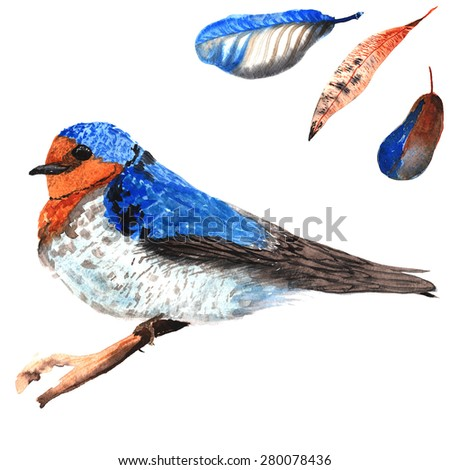 A set of hand-drawn watercolor containing bird Hirundo neoxena and feathers - stock photo