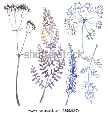 A set of herbs and flowers hand-painted watercolor. Botanical drawings. Flowers on a white background. - stock photo
