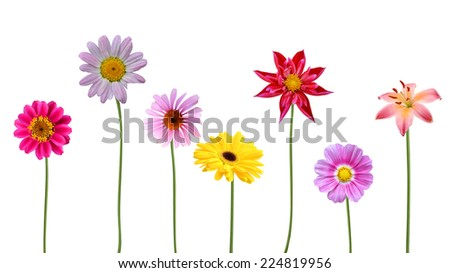 A set of isolated flower gardens  - stock photo