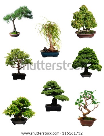 A set of miniature bonsai trees