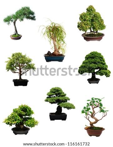 A set of miniature bonsai trees - stock photo