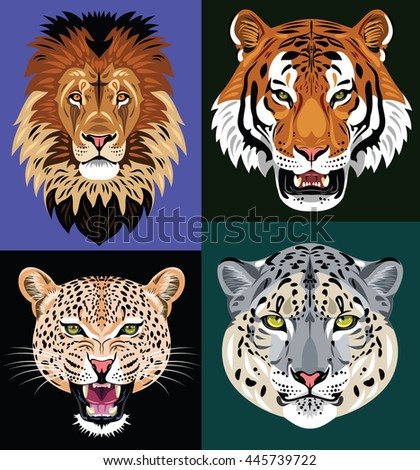 a set of portraits of predators - lion, tiger, leopard, jaguar - stock photo