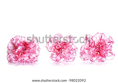 A set of three carnation flowers - stock photo