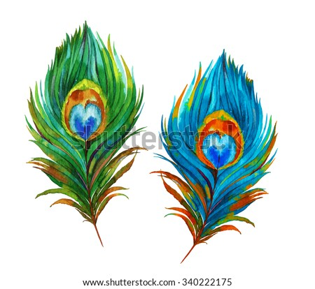 A Set Of Two Watercolor Peacock Feathers Accurate Illustration Vintage Style