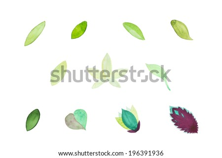 a set of watercolor painted leaves isolated on white - stock photo
