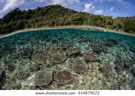 A shallow coral reef grows along the edge of the island of Banda in Indonesia. Banda is famous as one of the Spice Islands but is now better known for its spectacular marine life. - stock photo
