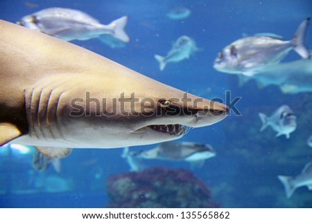 A shark is swimming in the deep water - stock photo