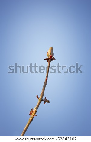 A sharp and detailed photo of nature details in springtime - stock photo