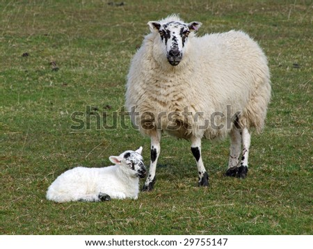 A sheep with its baby lamb.