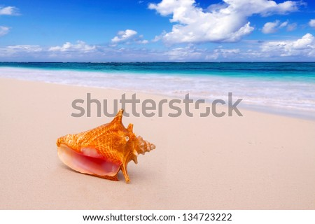 A shell on an exotic beach.