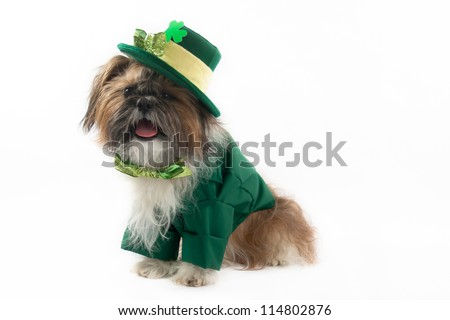 A Shih Tzu is dressed in a leprechaun outfit with bow tie and hat. - stock photo
