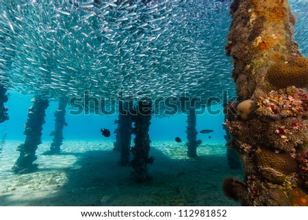 A shoal of baitfish form a circular ball underneath a manmade jetty while Lionfish patrol below - stock photo