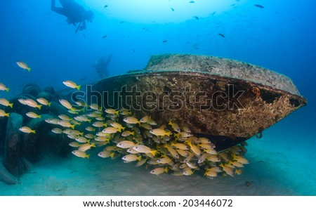 A shoal of snapper and SCUBA divers around a small underwater wreck - stock photo